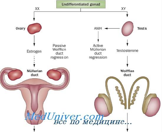 Нарушения сексуального развития у женщин