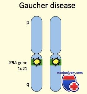 Генетика болезни Гоше