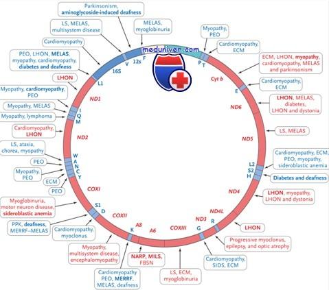 Виды патологии митохондриальной ДНК