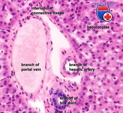 Эмбриональная карцинома яичка