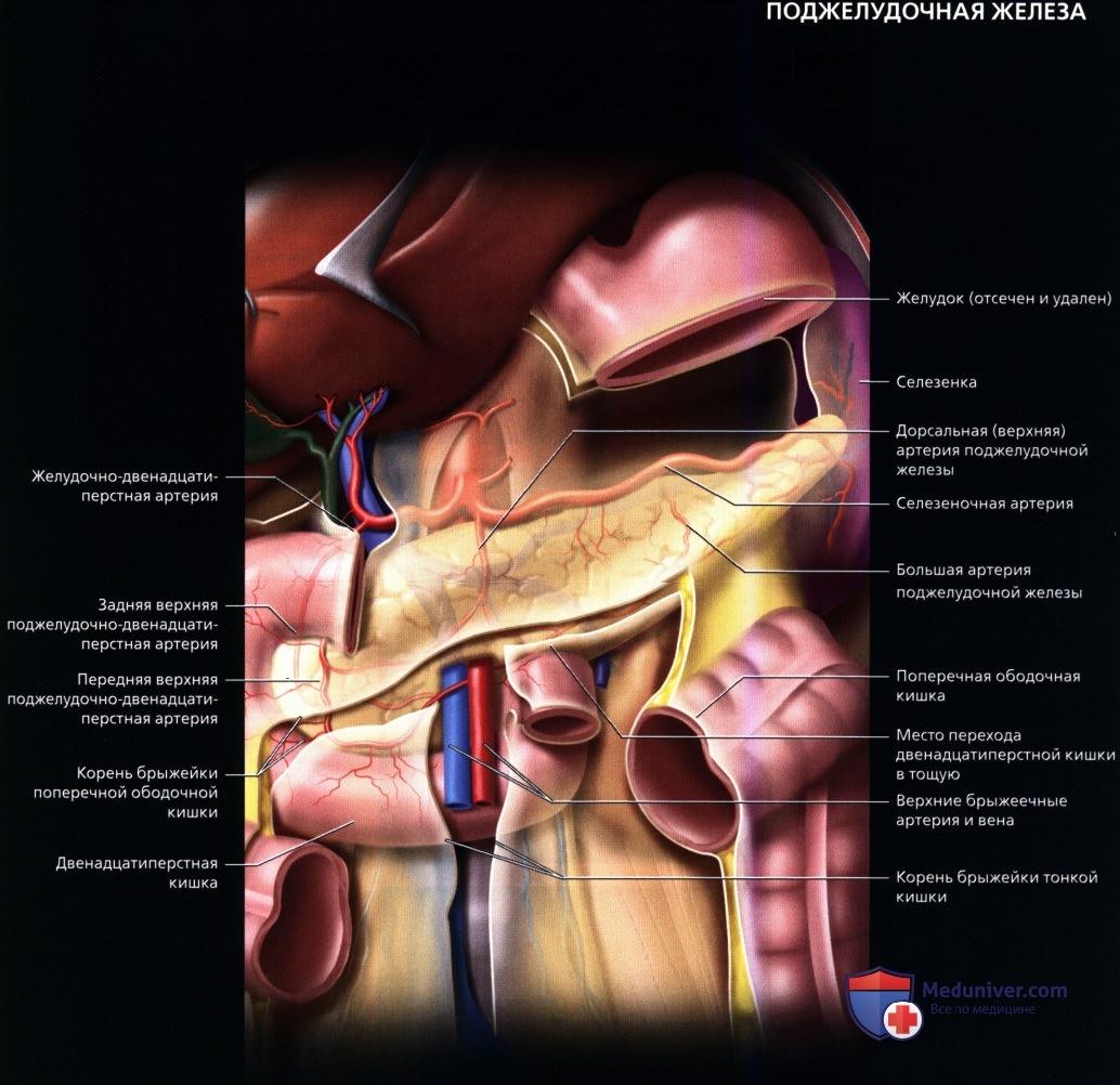 По задней поверхности поджелудочной железы thumbnail