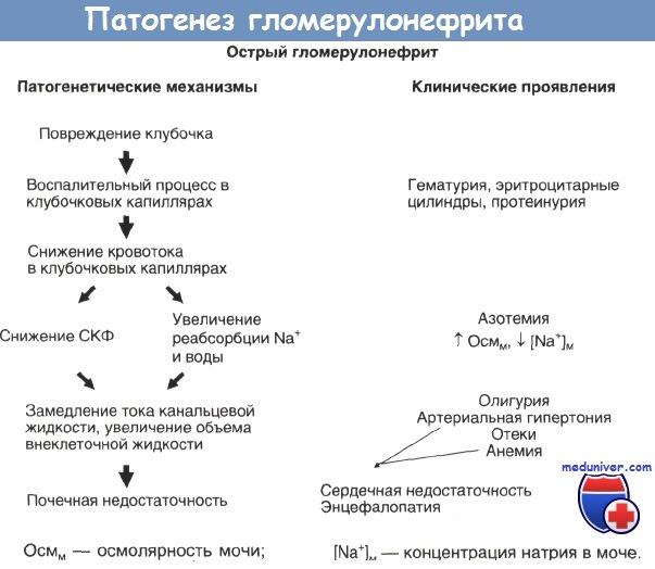 Лечение и прогноз острого постстрептококкового гломерулонефрита у ...