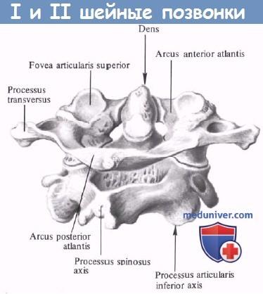 Анатомия спинного мозга поясничного отдела thumbnail