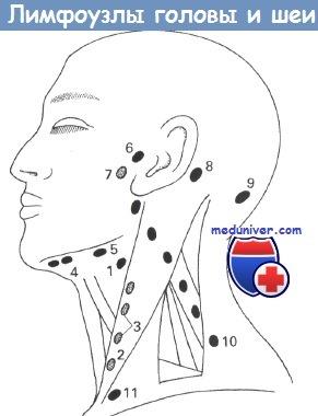 Лимфоузлы головы и шеи