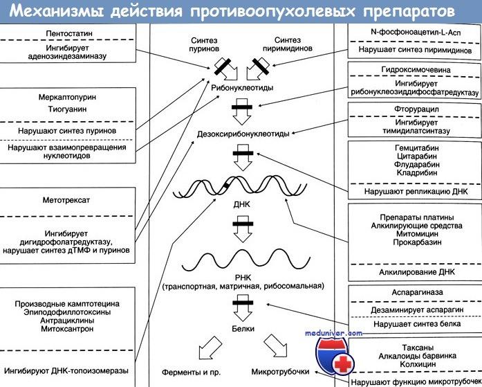 Механизмы действия препаратов для химиотерапии