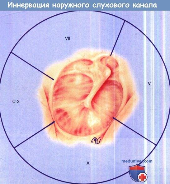 Иннервация наружного слухового канала и барабанной перепонки