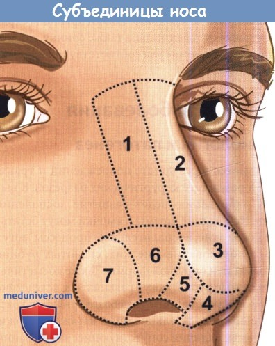 Субъединицы носа