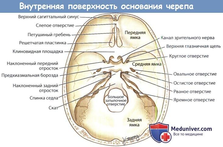 Внутренняя поверхность основания черепа