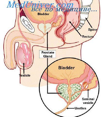 повышен холестерин высокой плотности что делать