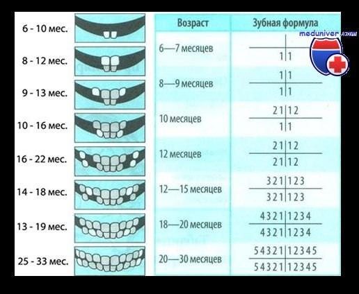 Сроки прорезывания молочных зубов у детей
