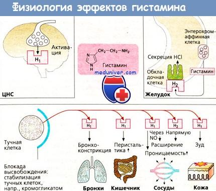 тучные клетки и гистамин