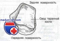 Изображение - Связки и сухожилия голеностопного сустава 431