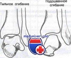 Изображение - Связки и сухожилия голеностопного сустава 432
