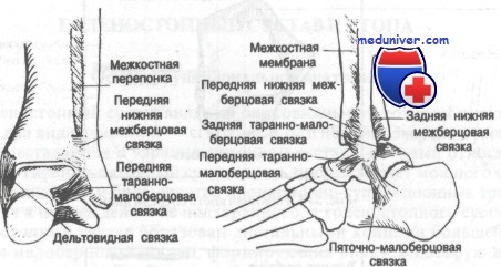 Изображение - Связки и сухожилия голеностопного сустава 433